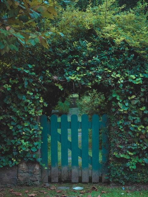 portail de jardin avec buissons