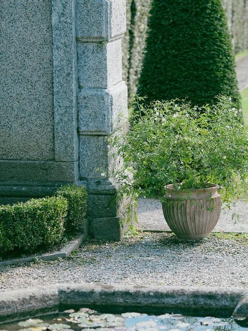 point d'eau dans le jardin et plante verte dans un cache-pot vintage