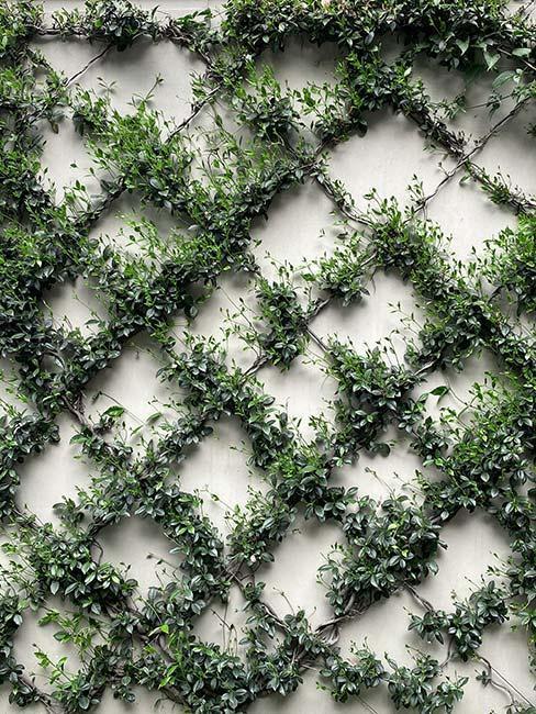 mur en briques végétal