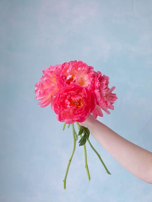 bouquets-de-pivoines