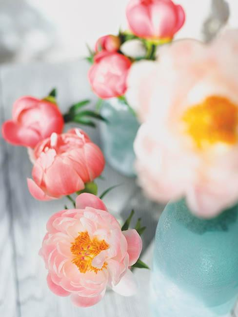 pivoines-roses