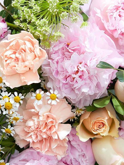 fleurs-pivoines