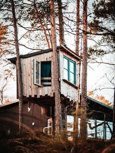 Cabane vintage dans un arbre avec fenêtres vertes