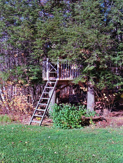 cabane dans un arbre avec échelle dans un jardin