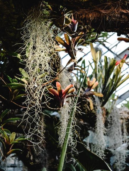culture de plantes exotiques