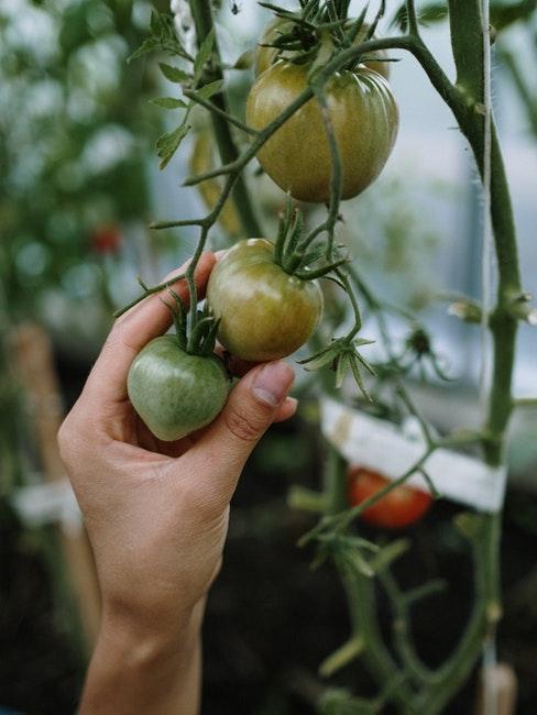 cultiver ses légumes dans une serre de jardin