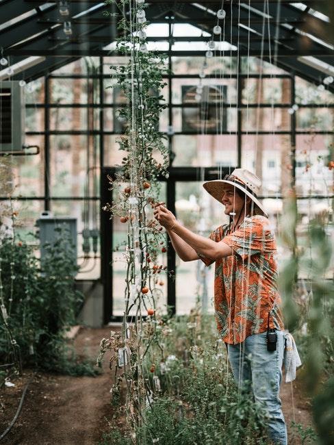 grande serre de jardin en verre