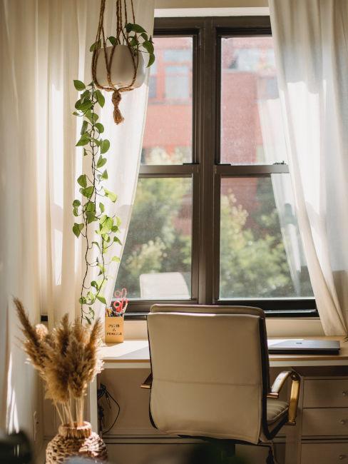 rideaux, voile, bureau, herbes sèches