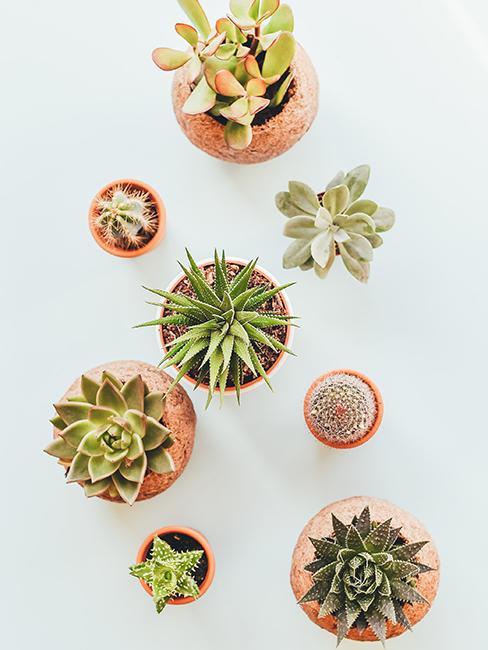 petites plantes dans pot comme cadeau pour invités à un mariage