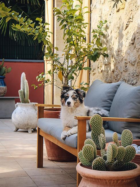 terrasse avec canapé de jardin en bois et gris avec chien assis dessus dans la maison en pierre de Julien Duquaire