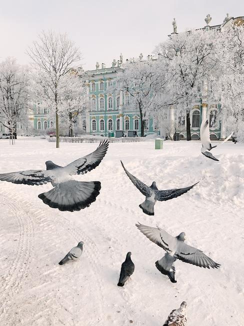 mariage en hiver dans la neige avec envol d'oiseaux