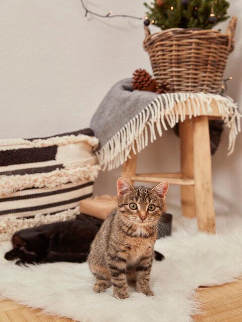 taburet en bois, plaid cosy et chats