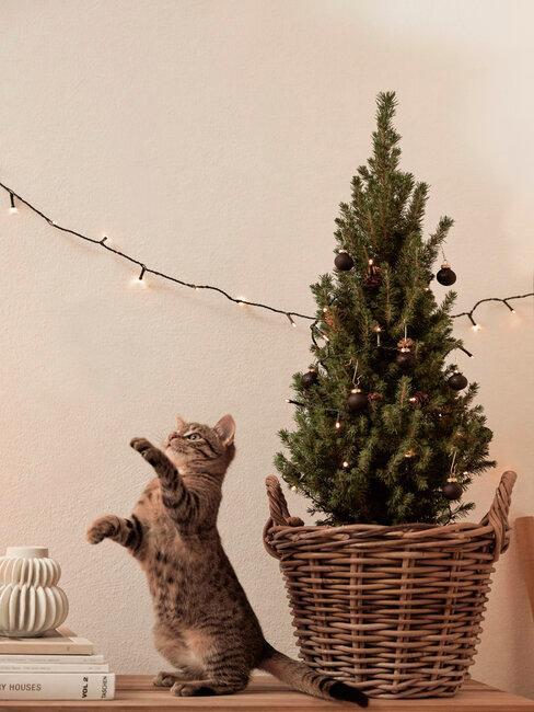 fête de noël en famille avec le chat, sapin de noël