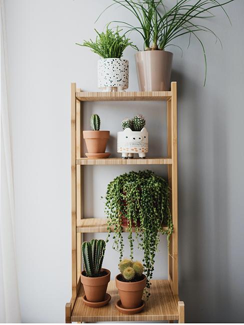 étagères avec plantes