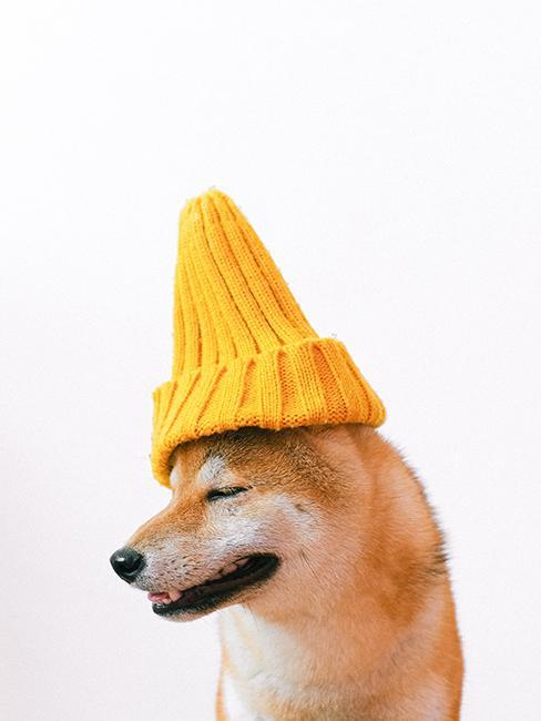 bonnet jaune en laine sur un chien