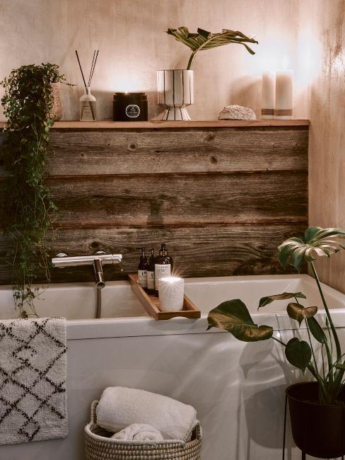 piante da bagno