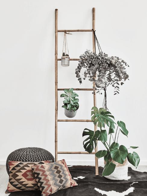 Combattere aria secca in casa con le piante