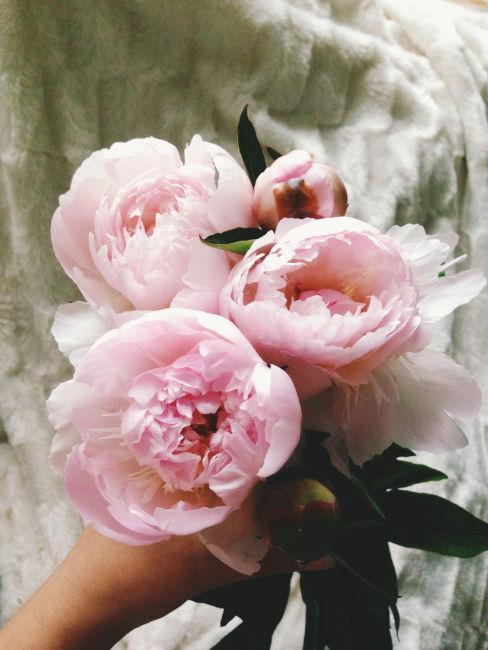 peonie rosa chiaro