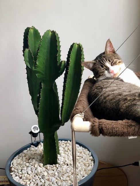 Cactus in casa