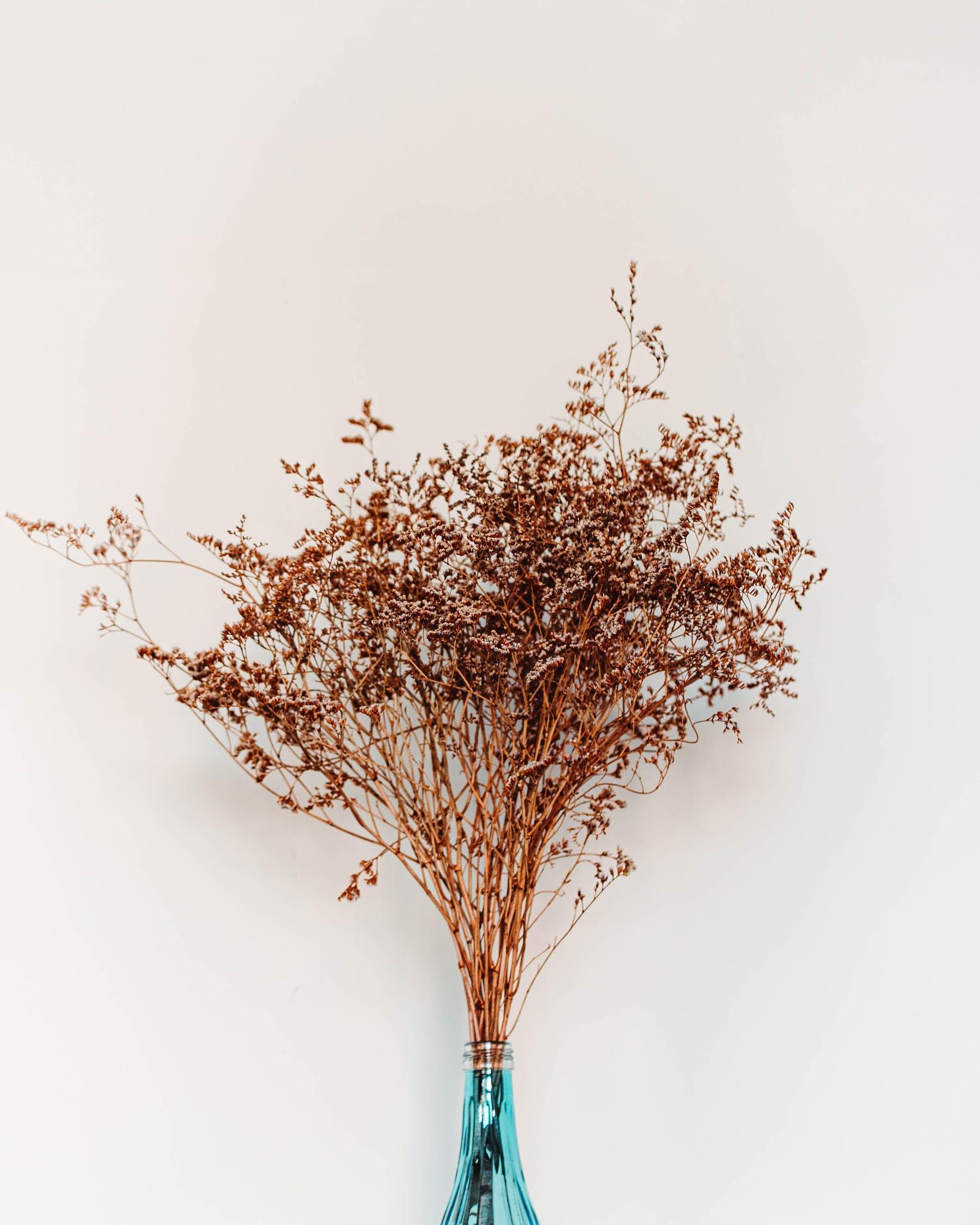 Fiori secchi nel vaso