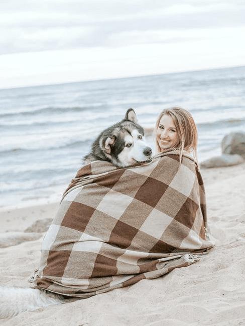 Cane in spaiggia