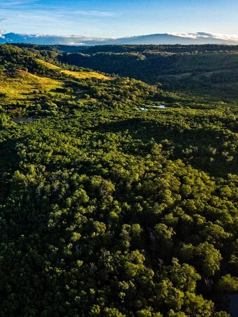 foresta in costa rica