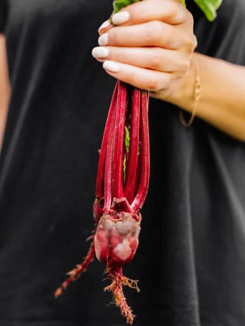 Verdure autunnali: barbabietola