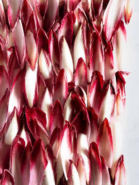 foglie di indivia belga