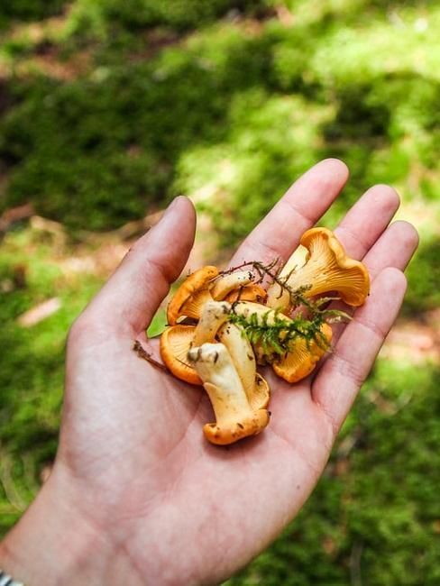 Vitamina D alimenti: funghi