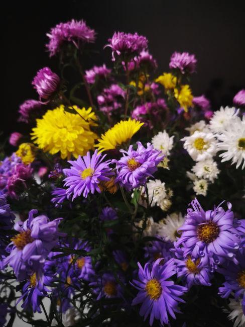 aster viola, bianchi e gialli
