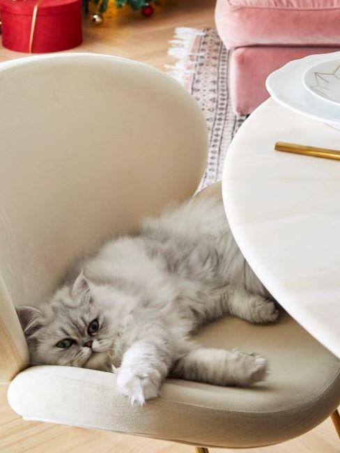 gatto moustachic su sedia bianca