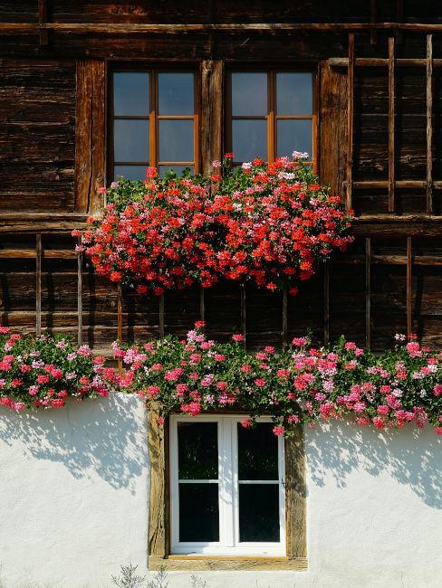 casa in legno con fiori rossi decorativi