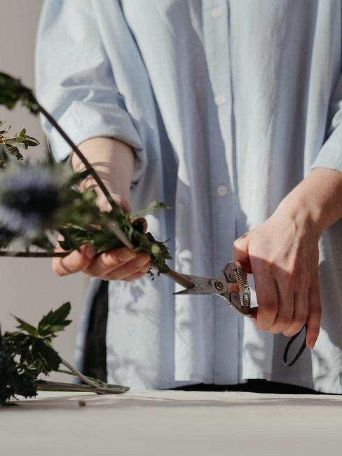 Quando potare le piante
