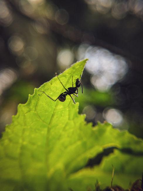 Come eliminare le formiche dalle piante