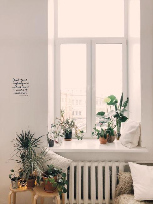 Rinnovare casa con le piante