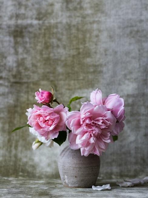 Peonie in vaso