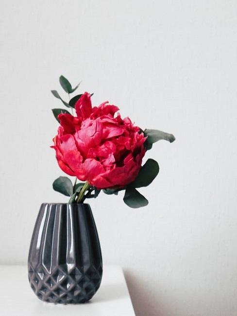 Peonia in vaso