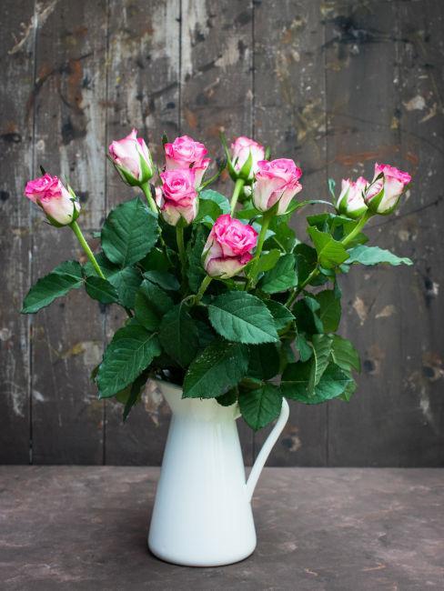 Come curare le rose in vaso