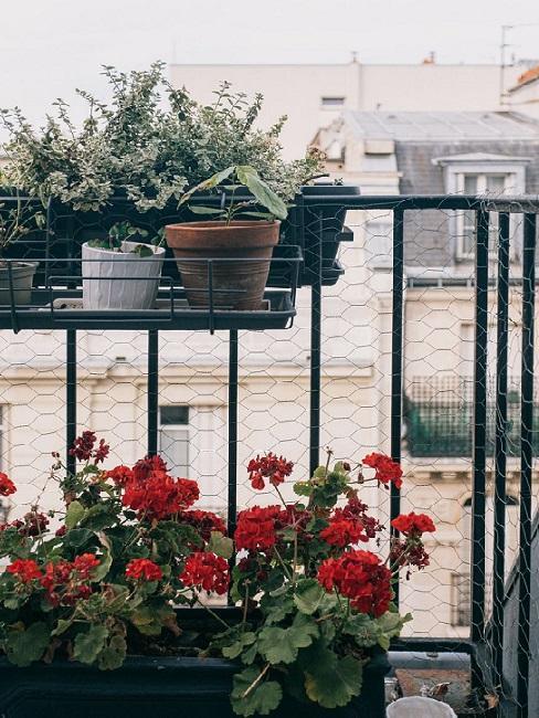 balcone con piante e erbe