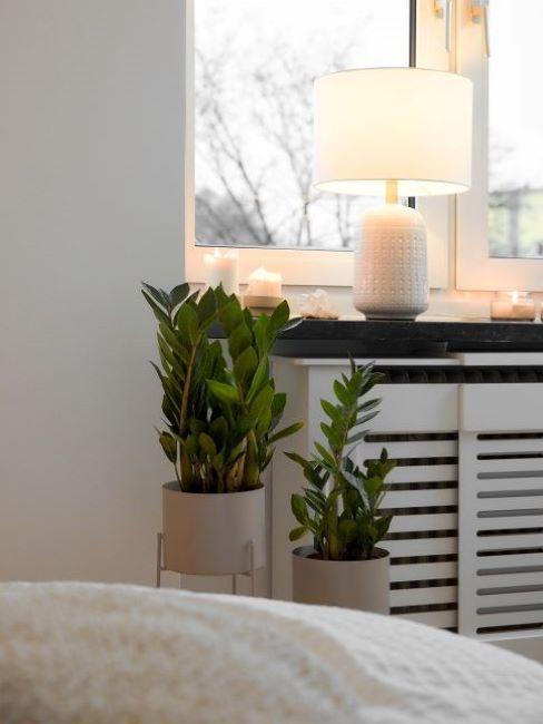 piante in camera