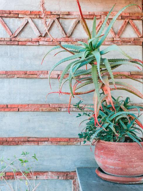 Cactus sul terrazzo