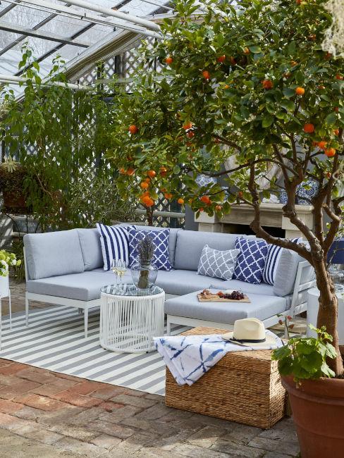 Terrazzo con albero di mandarini
