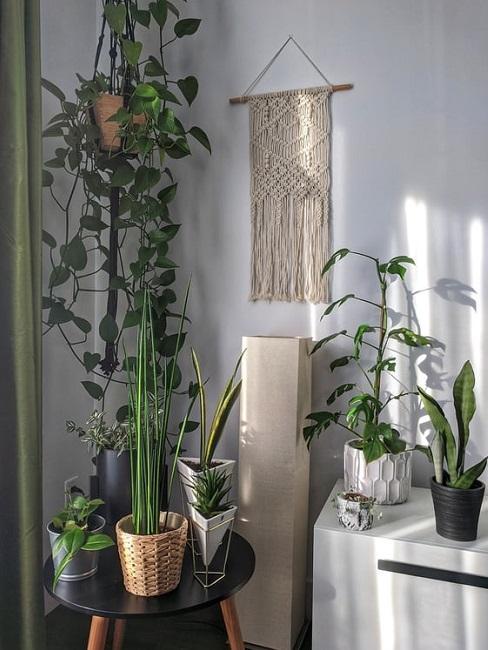 Piante tropicali da interno