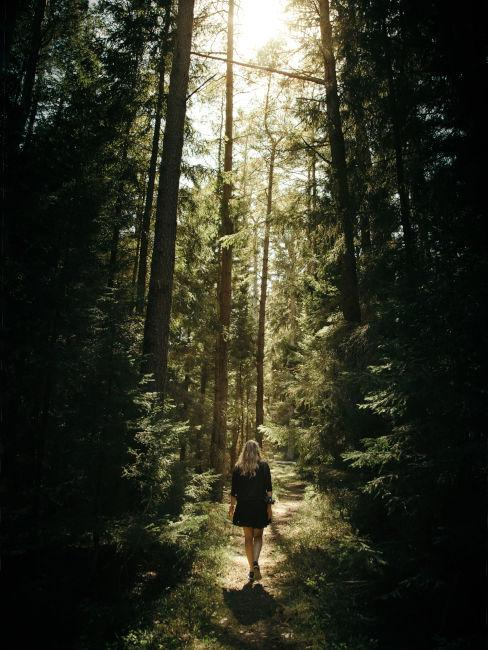 Forest therapy