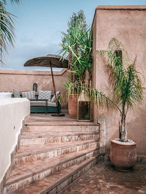 terrazzo piante outdoor