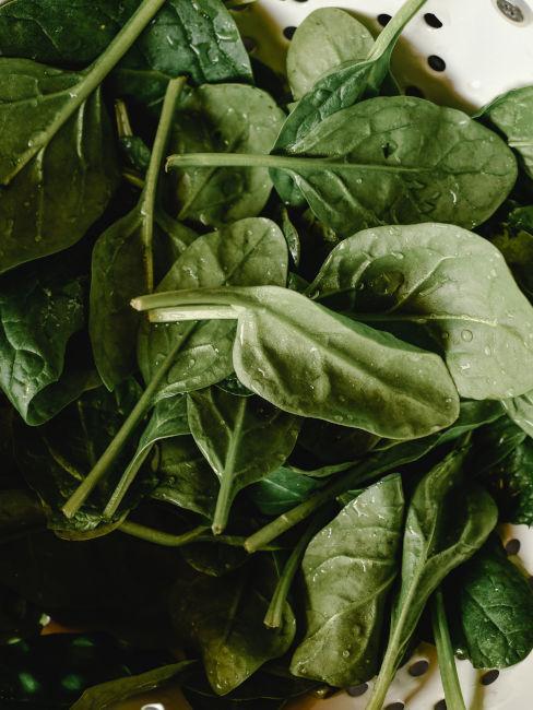Calendario semina spinaci
