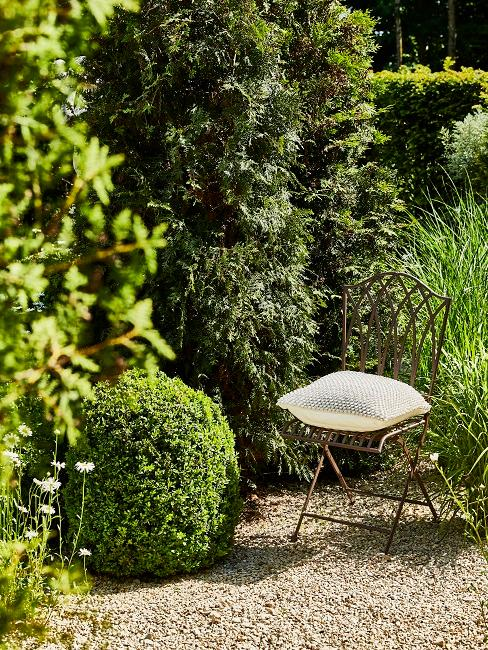 Giardino mediterraneo: pianta bossi