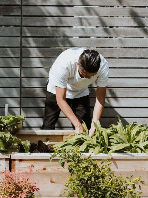 preparare il giardino potando gli arbusti