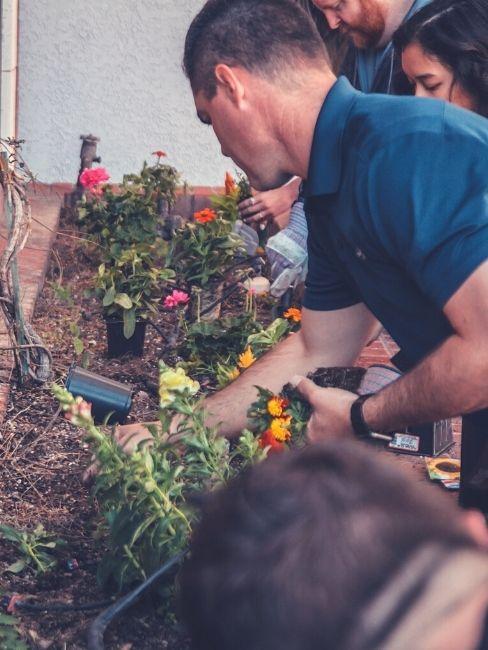 preparare il giardino per la primavera e piantare i fiori