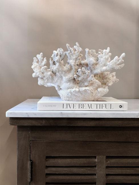 Corallo bianco e libro